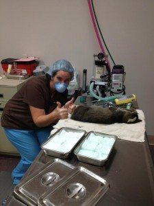 Veterinary 1